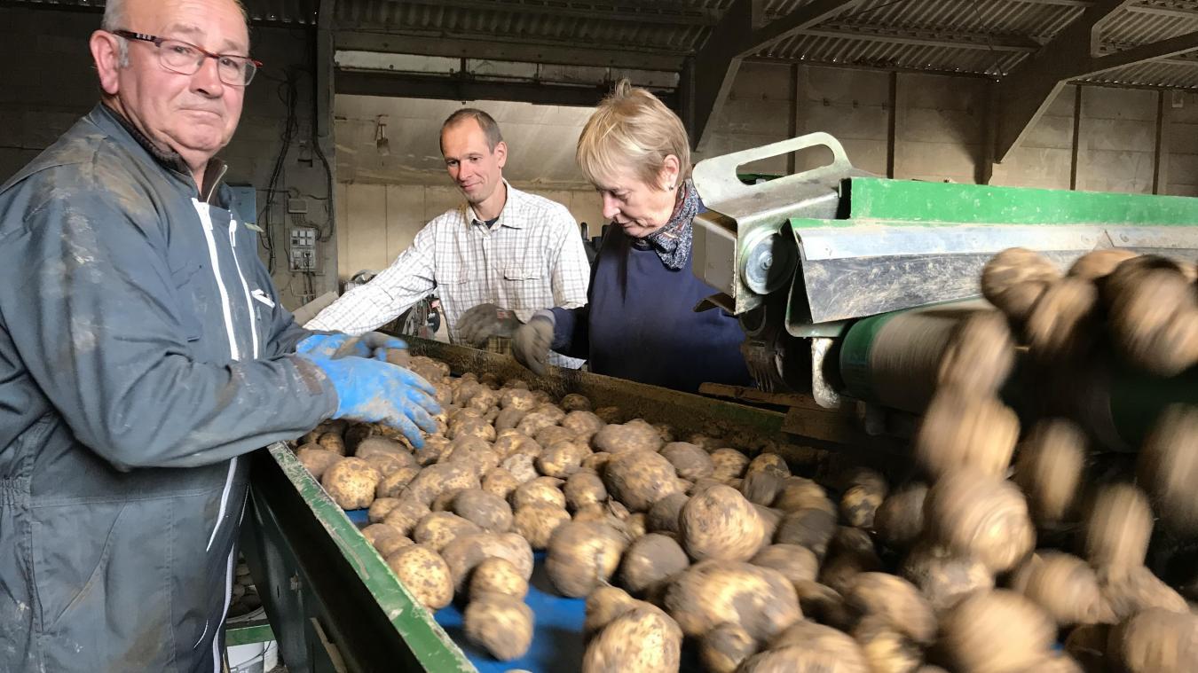 preț rezonabil gama exclusivă vastă selecție Flandre : retardée par les pluies, la récolte de pommes de terre prend l'eau