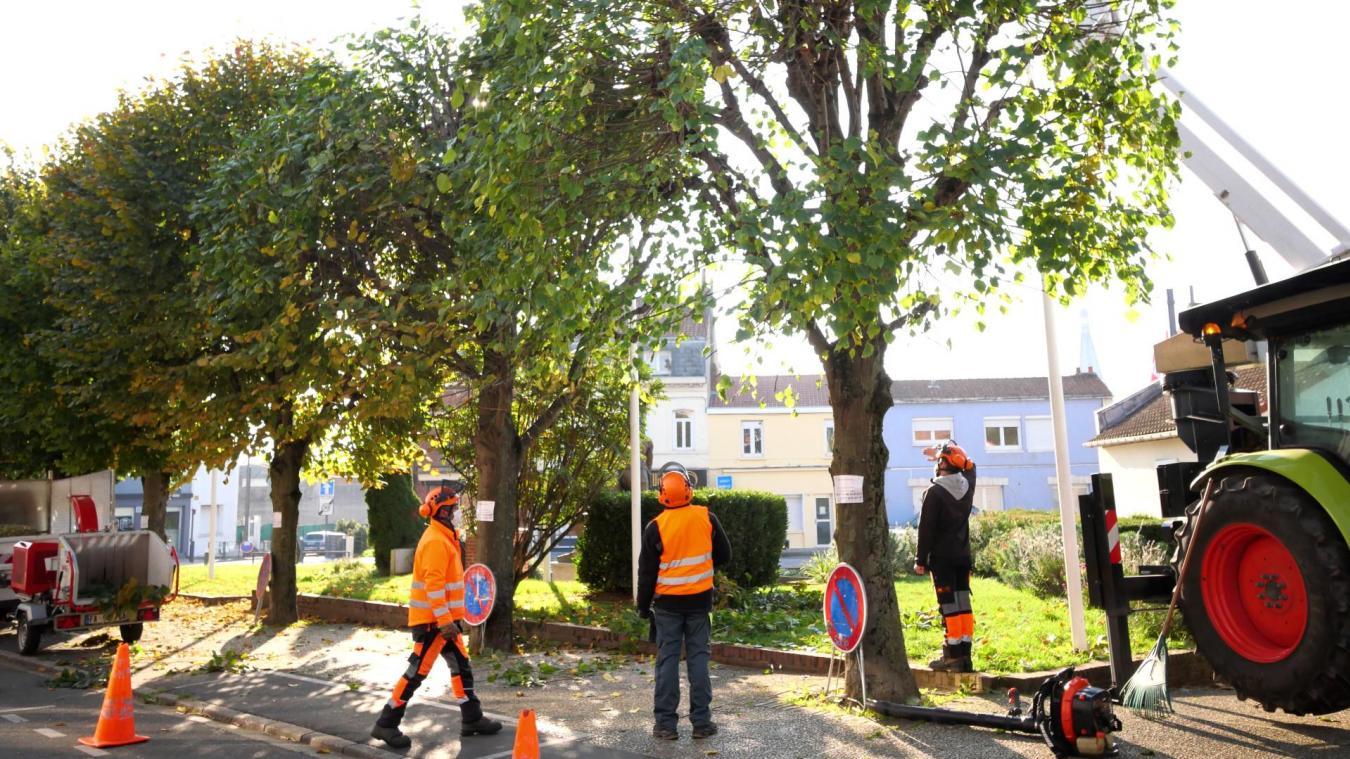 Liévin: la municipalité change son fusil d'épaule concernant l'entretien de son patrimoine arboré