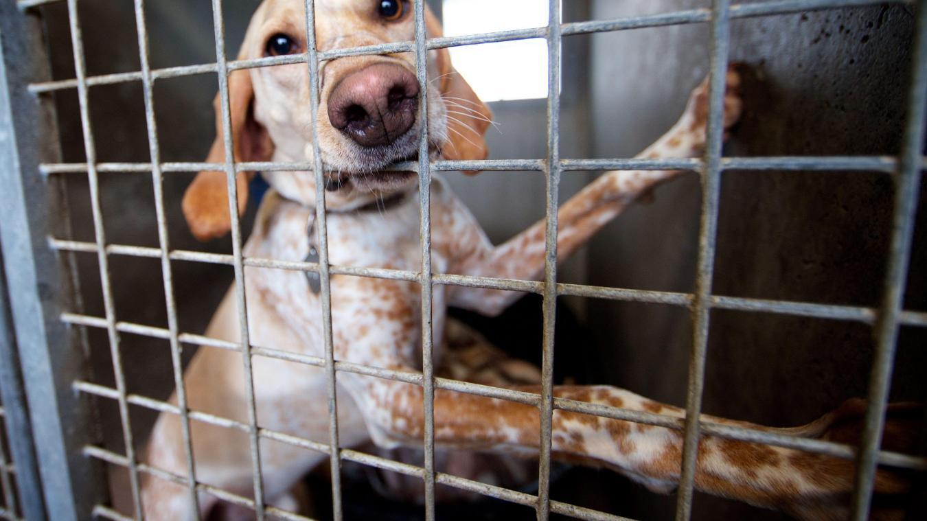 Il Est A Nouveau Possible D Adopter Un Animal A La Lpa De Calais