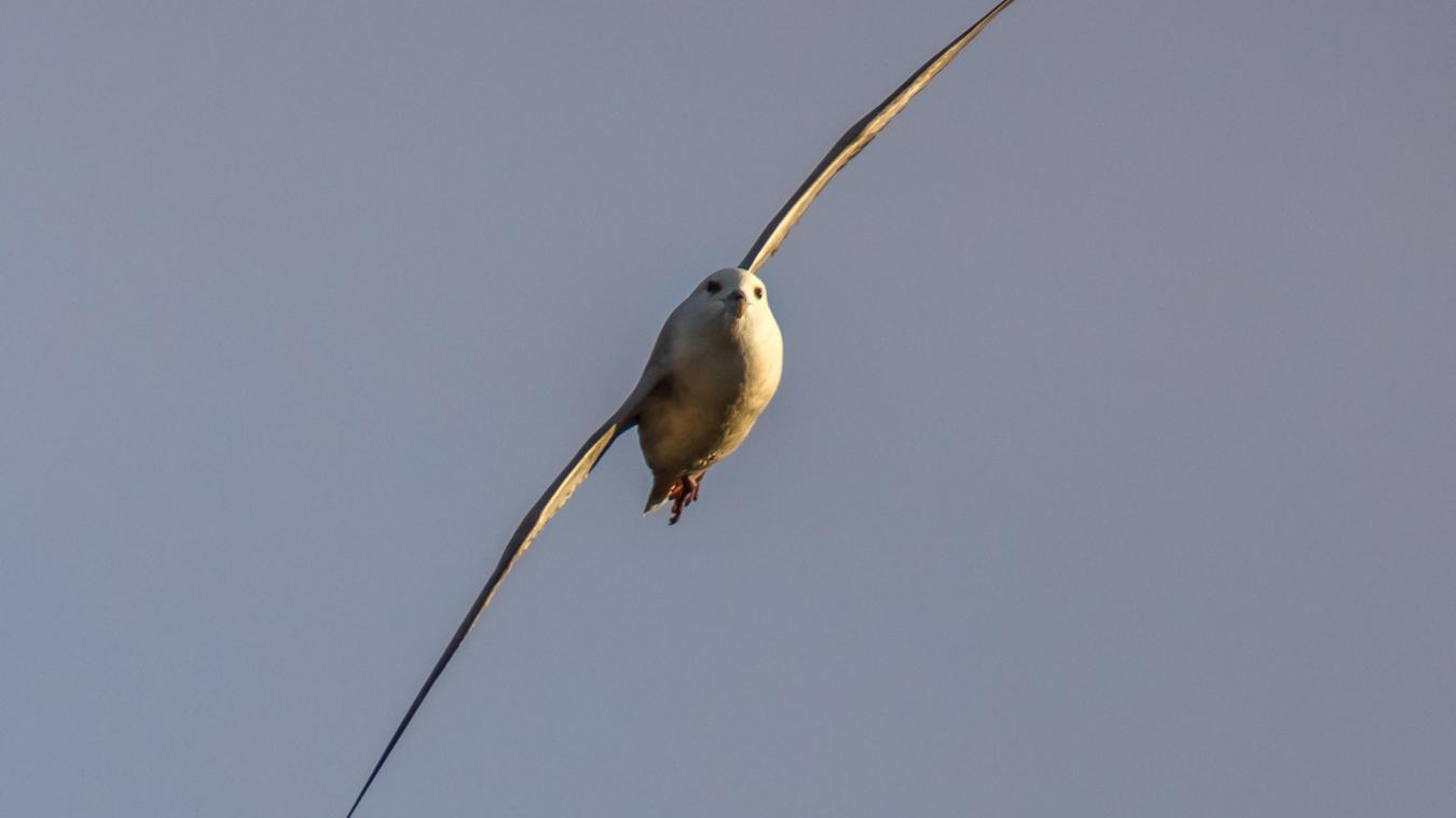 site de rencontre oiseaux rencontre libertine sainte-marthe-sur-le-lac