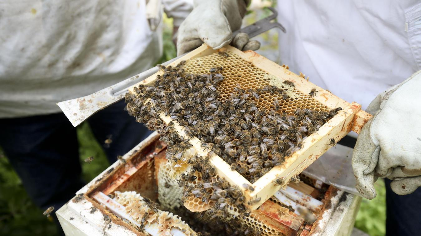 Vous voulez installer une ruche dans votre jardin? Voici les règles à respecter