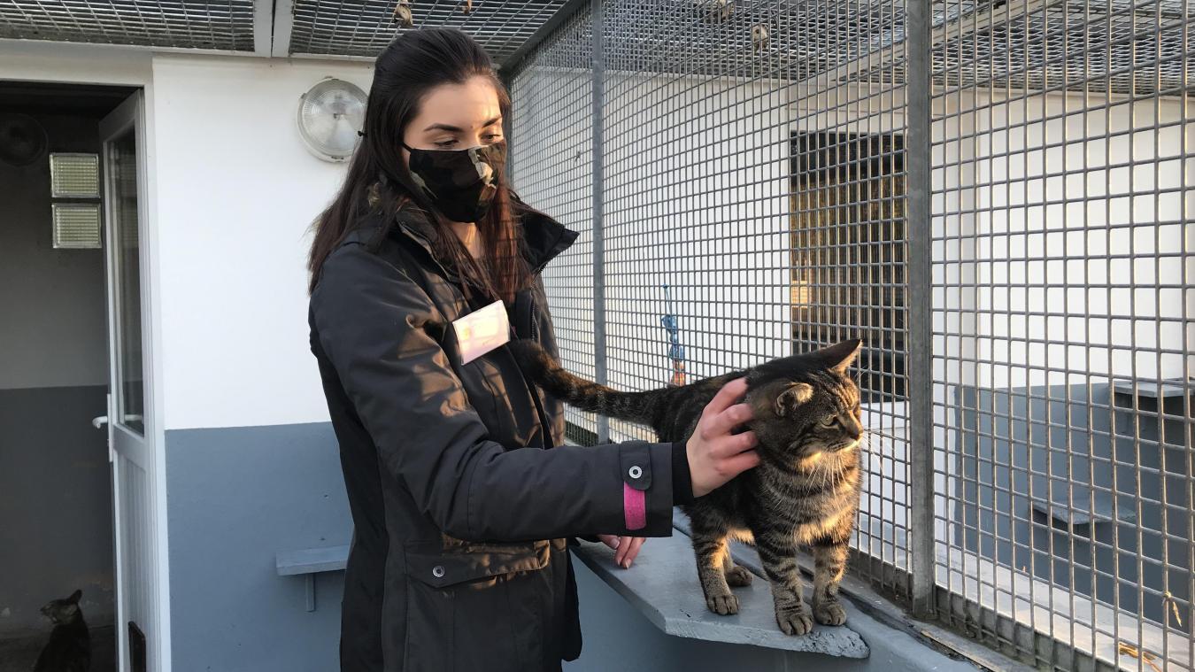 Les chats de la SPA Canche-Authie décimés par une épidémie, les adoptions sont suspendues