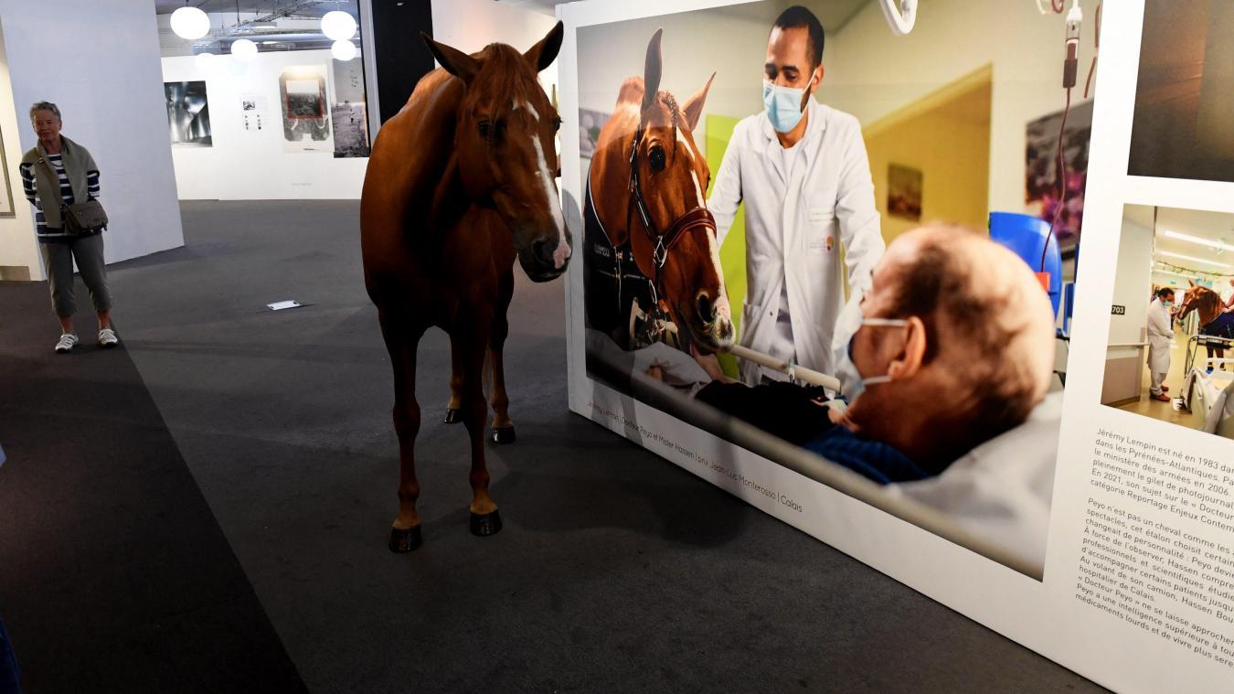 Lille: Peyo, le cheval qui détecte les cancers, invité spécial des «Transphotos»