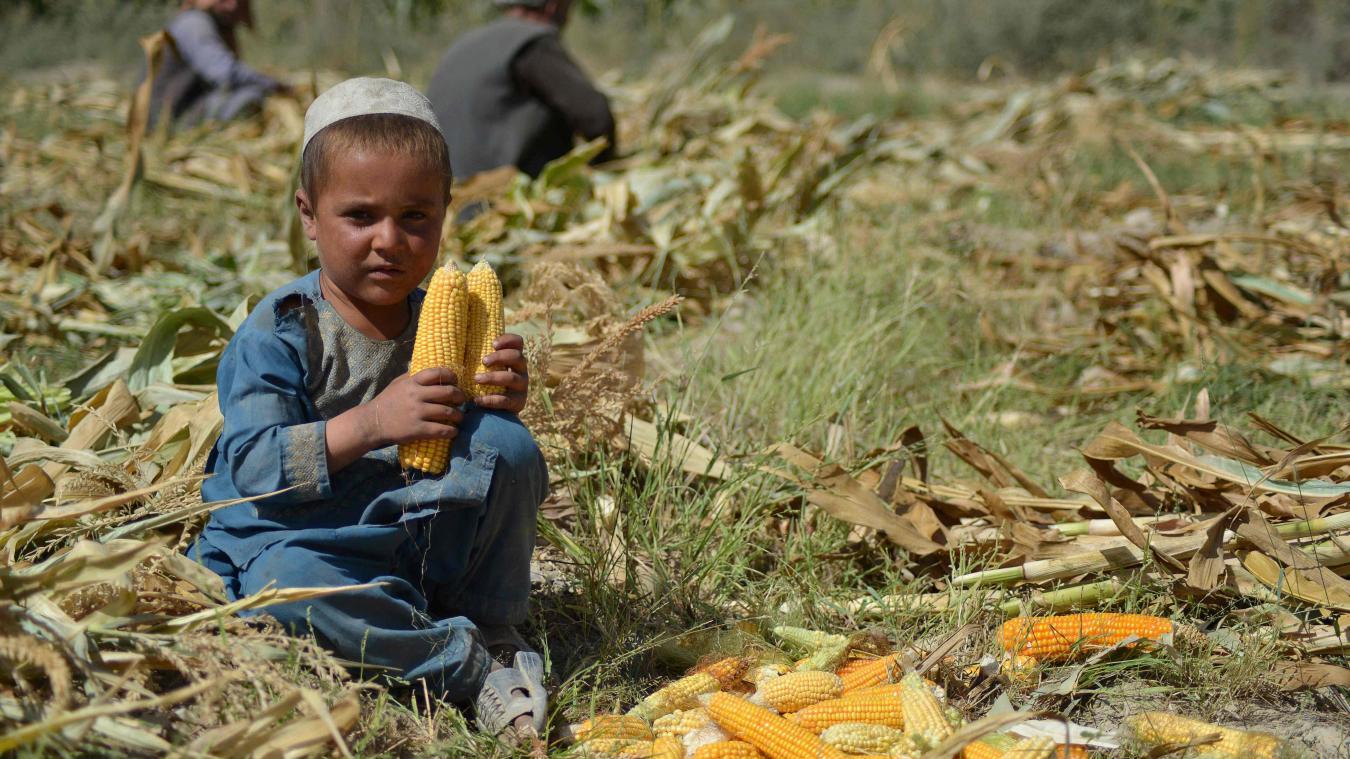Plus de la moitié des Afghans seront bientôt en situation d'insécurité alimentaire aiguë