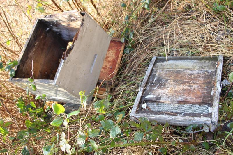 apiculteur wavrans sur l'aa