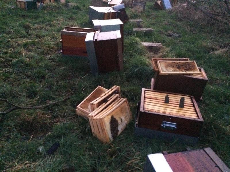 Outre les abeilles décimées par le feu, celles nichant dans les ruches renversées ont beaucoup souffert.