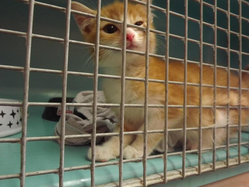 130 Chats Et Chatons A Adopter A La Spa A Saint Omer