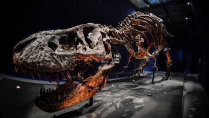 Dinosaures Un TRex Pose Sa Carcasse Tout Lete Au Jardin Des Plantes A Paris